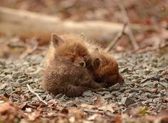 Arka bahçelerinde sevimli bebek tilkiler bulan baba ve kızı | Gaia Dergi