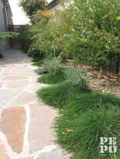 Australian native courtyard garden with Eco Outdoor's Natural Italian Porphry  Maroubra, Eastern Suburbs By Pepo Botanic Design