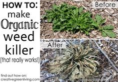 DIY weed killer that actually works! No need to use toxic Round Up or other weed killers anymore.