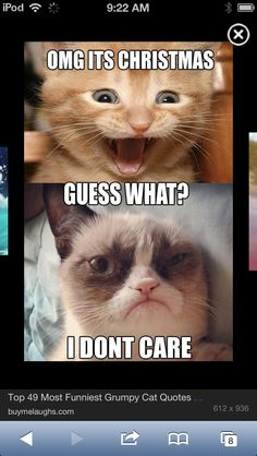 Pin By Charles Alwyn On ANIMALS GRUMPY CAT Pinterest Grumpy - 8 cat puns that will put a smile on your face