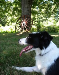 The location. Mason, NH. (And Lindsay's dog, Ziggy).