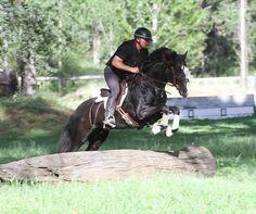 Photos and Video of Connemara Stallion R Blue Moon. Connemara Pony, Instagram Widget, Hunter Jumper, Blue Moon, Dressage, Equestrian, Horses, Photo And Video, Gallery