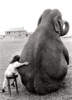 Friends come in all sizes little girls, dream, pet, water for elephants, children, baby animals, friend, roll tide, kid