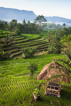 Beautiful terraced rice fields of Sidemen, Bali, Indonesia.