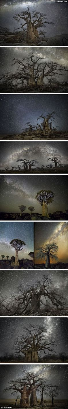 Africa's Oldest Trees Against Starry Night Skies (By Beth Moon) so pretty! Starry Night Sky, Night Skies, Best Of 9gag, Old Mansions, Moon Photography, Earth From Space, Tree Of Life, Best Funny Pictures, Weird