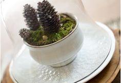 Winter+terrarium+1
