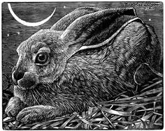 Cosmic Rabbit, Nicholas Wilson ENGRAVING