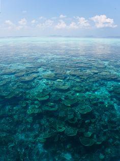 29 novembre 2013: Vakarufalhi, Maldive. Anche oggi è una bellissima giornata: il cielo è sereno e il mare è di un turchese incredibile…