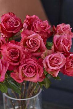 Roser skaper glede i alle hjem.