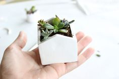 DIY: succulent planters... @Caitlin Burton, this would be cute for your favors!