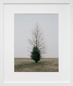 Belmont Harbor Tree II, Chicago - 20x200