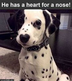 27 funny baby animals cute puppies, dalmatian puppies, dogs and puppies, doggies, Funny Babies, Funny Dogs, Funny Humor, Cute Baby Animals, Funny Animals, Animals Dog, Wild Animals, Smiling Animals, Animal Babies