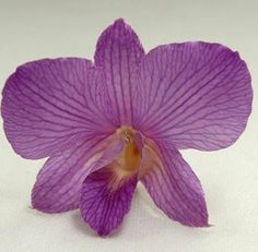 Freeze Dried Orchids to be scattered around centerpiece