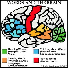 Linda Robinson: Our Words: See Hear Think Say Different parts of the brain are used when interacting with language. Speech Language Therapy, Speech Language Pathology, Speech And Language, Speech Therapy, Aphasia Therapy, Brain Anatomy, Anatomy And Physiology, Brain Based Learning, Brain Science