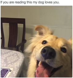 Spreadin' barks and smiles!