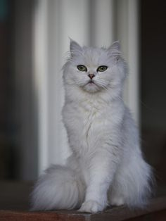 Adorable Cat picture