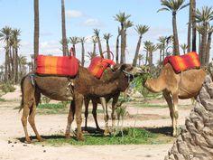 Morocco. 2014