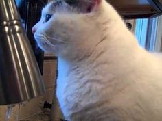Amazing Cat Dries Her Face with a Bath Towel