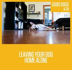 So, maybe you crate trained your dog and now you want to transition into leaving him loose in the house while you're at work for the day? We've gathered some great advice on making the transition smooth! Read on!