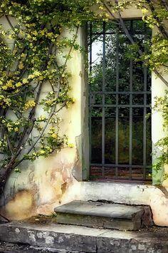 The Rose Vined Door. Lynn Andrews