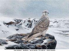 Travels in C Minor: Lars Jonsson - swedish bird artist extraordinaire Uppsala, Bird Artists, Arctic Animals, Wildlife Art, Animal Drawings, Art Forms, Animals Beautiful, Illustration Art, Illustrations