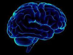 Brain Clip Art - Bing Images