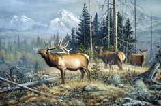 Elk painting by Scott Zoellick Wildlife Paintings, Wildlife Art, Animal Paintings, Nature Paintings, Elk Pictures, Pictures To Paint, Elk Drawing, Nature Artists, Art Nature