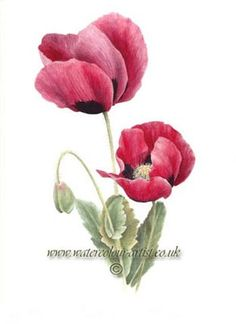 poppy botanical prints | Flower paintings and fine art botanical prints from watercolour artist ...