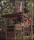 Stile's Shingled TreeHouse