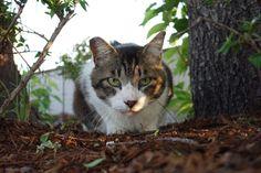 FULL FACE | 猫|ネコ|ねこの日々
