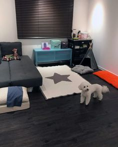 Discover a private enclave for your pooch with the top 60 best dog room ideas. From crates to wash stations, explore unique canine interior space designs. Dog Room Design, Dog Design, Dog Bedroom, Bedroom Ideas, Bed Ideas, Dog Room Decor, Wrinkly Dog, Puppy Room, Dog Spaces