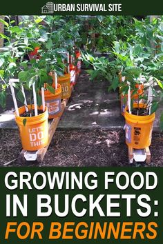 Growing your own groceries in five-gallon buckets allows you to raise enough food to feed a family of four in a tiny space. Growing Veggies, Growing Plants, Bucket Gardening, Gardening Tips, Gemüseanbau In Kübeln, Home Vegetable Garden, Veggie Gardens, Farm Gardens, Container Gardening Vegetables