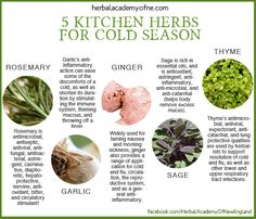 5 Kitchen herbs for cold season - keep this chart on hand!