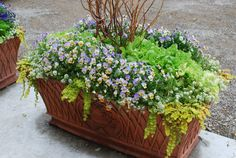 lettuce, violas and creeping jenny from Detroit Garden Works