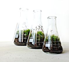 Science Beaker Terrarium Set / Industrial Decor / Flask Planters / Office Gift Set for Him on Etsy, $49.00