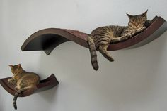 Cool Cat Home Cat Shelves