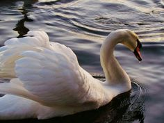'Swan', Princes park, Eastbourne