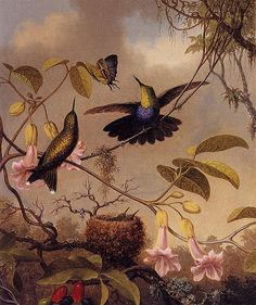 Fork-Tailed Woodnymph ~ by Martin Johnson Heade