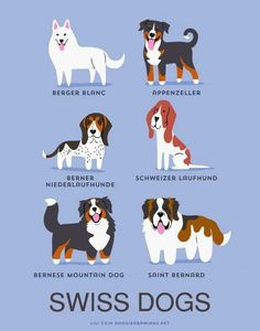 Dog Breeds print: SWISS DOGS art print (dog breeds from Switzerland) Stampa di razze canine: stampa d'arte SWISS DOGS (razze canine dalla Svizzera) Chien Saint Bernard, Pet Dogs, Dogs And Puppies, Doggies, Dogs 101, Animals And Pets, Cute Animals, Types Of Dogs, Dog Illustration