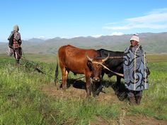 Lesotho Working the fields Tour Around The World, People Of The World, Rest Of The World, Paises Da Africa, South Afrika, Xhosa, Most Beautiful Animals, Like A Local, Travel Planner