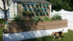 My garden is finally complete!