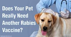 New guidelines recommend that cats and dogs exposed to rabies who are overdue for a vaccine are to be given a booster shot, followed by an observation period. http://healthypets.mercola.com/sites/healthypets/archive/2016/04/06/overdue-rabies-vaccine.aspx