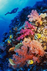 Scuba dive a coral reef. And hopefully find Nemo!