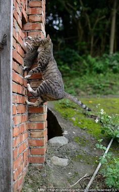 Katze Cat Chat Gatto * Kätzchen wir durchs Fenster geschoben