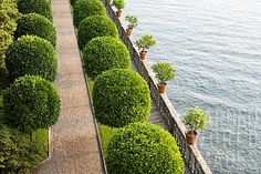 ISOLA BELLA, LAKE MAGGIORE, PIEDMONT (PIEMONTE) ITALY. ONE OF THE BORROMEAN ISLANDS FAMOUS FOR BEAUTIFUL SCENIC VIEW, FORMAL LINES OF LEMON TREES IN CITRUS GARDEN
