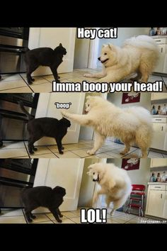 Funny dogs & Dog memes hilarious can't stop laughing Funny animal pictures& fun. Funny Dog Memes, Funny Animal Memes, Cute Funny Animals, Funny Animal Pictures, Cat Memes, Funny Cute, Funniest Memes, Funny Photos, Freaking Hilarious