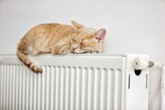 Ways to keep warm at home, With energy bills soaring and temperatures set to dip, homes are about to get a whole lot chillier. If you're on central heating avoidance, try our 20 tips to keep warm at home. Keep Warm, Stay Warm, Cat In Heat, Electric Fan, Cat Sleeping, Ginger Cats, Good House, Central Heating, Cool Gadgets