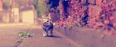 strollin'