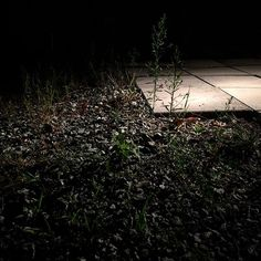 Lights on weeds