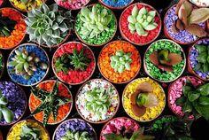 Kolorowe podłoża do kwiatów doniczkowych